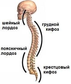 Периневральная арахноидальная киста на уровне s2