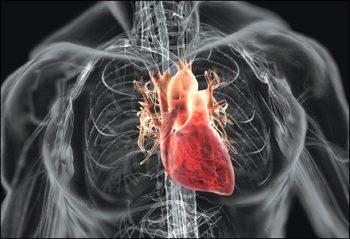 Киста на сердце